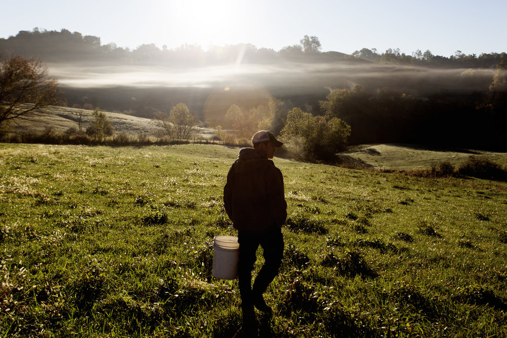 Reitano walks through one of his pastures on a foggy morning after feeding his cattle.
