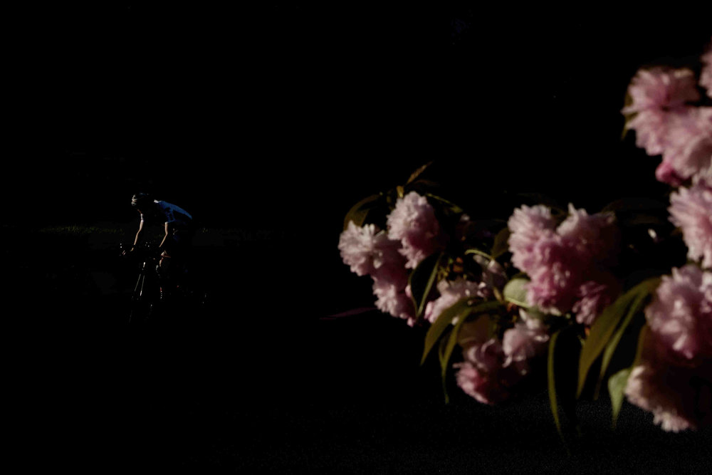 A man bike rides down Cherokee Trail as a dogwood tree flowers in Knoxville.