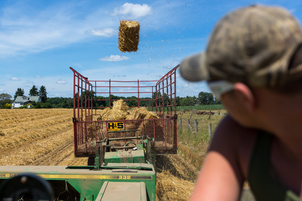 aaron Sniezek, 16, watches as a bail of straw is thrown into a collection trailer at his families farm near New Castle on Sunday afternoon. Sniezek is a third generation farmer on his families 300 acres of wheat, corn, soy, oats and hay.