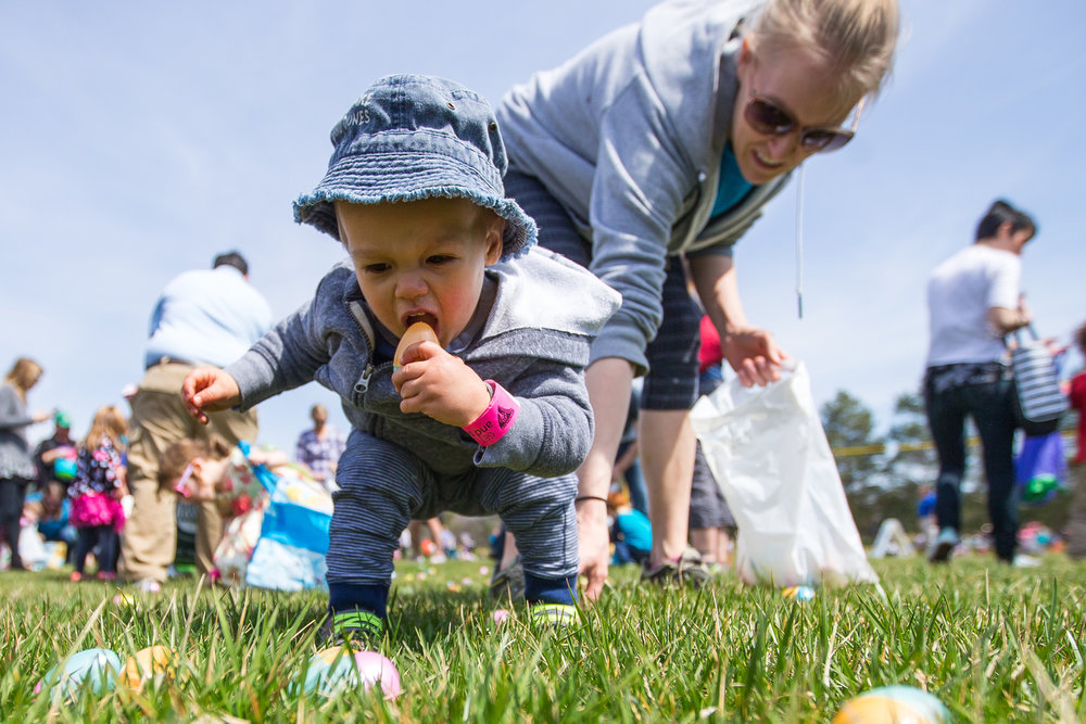 Oliver Ho, 18 months, puts an Easter egg into his mouth during the Easter Egg Scramble at Hudson Mills Metropark in Dexter on Sunday, April 9, 2017. Kids and their parents were able to enjoy an animal show, a visit with the Easter Bunny, get their face painted, and hunt for eggs. Matt Weigand | The Ann Arbor News