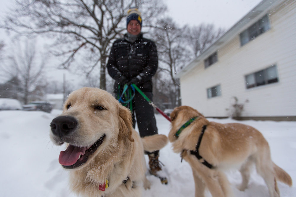 Hal Chrisman walks Ollie, 9 months, left and Oslo, 18 months, along West Mosley Street on Sunday, December 11, 2016. Ann Arbor saw its first significant snowfall on Sunday and a total of 6 to 10 inches is expected by the end of the day. Matt Weigand | The Ann Arbor News
