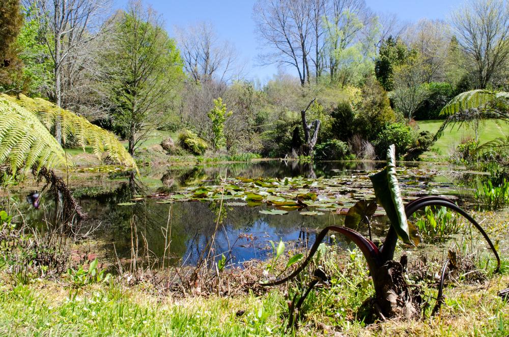 Trelinnoe lake bottom