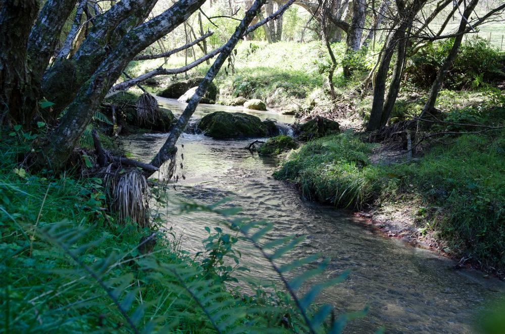 Tangoio Forest Bush Walk