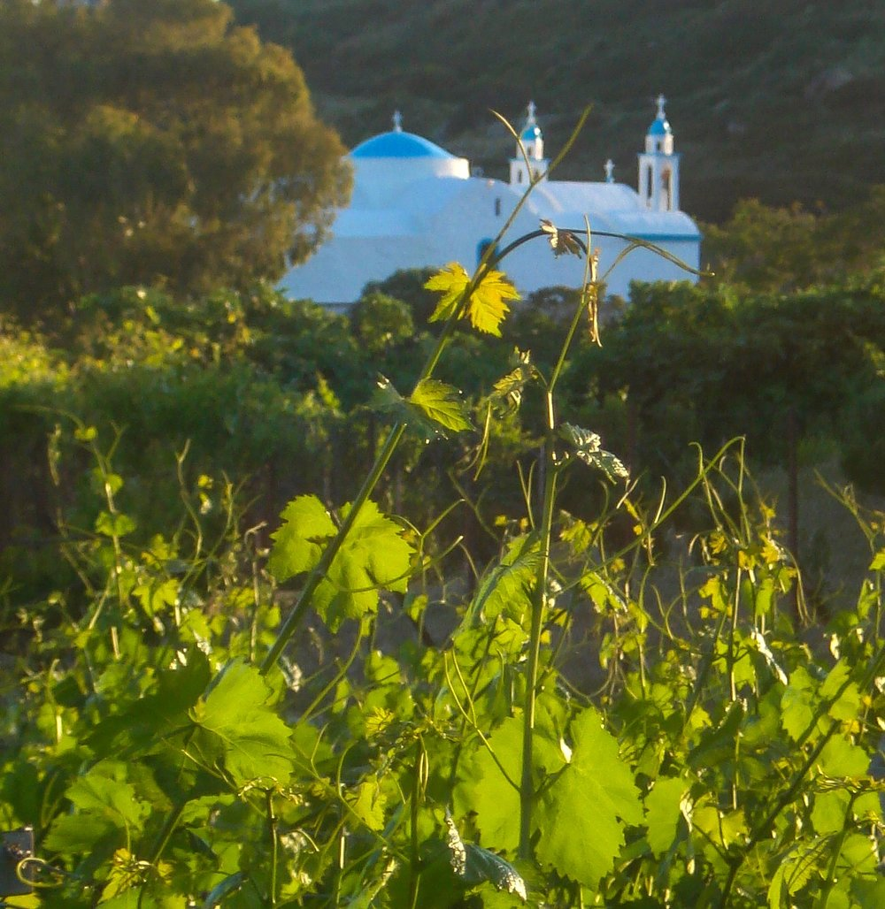 chapel and vines.jpg