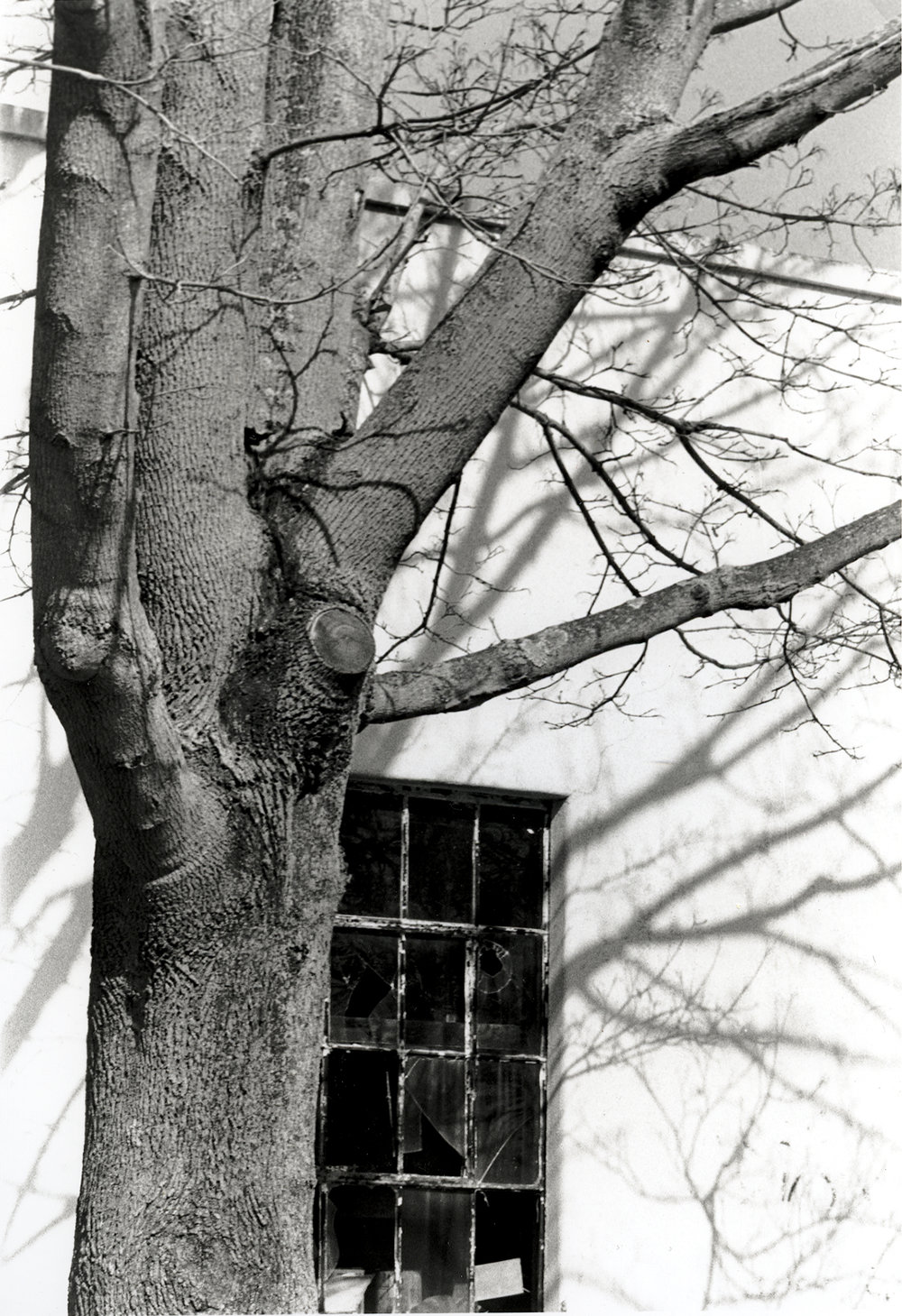 tree.window.jpg