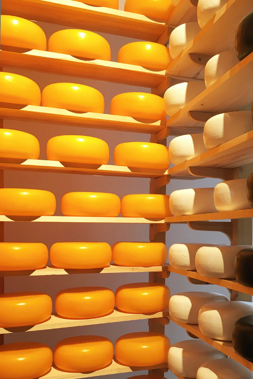 cheese-rectangle.jpg