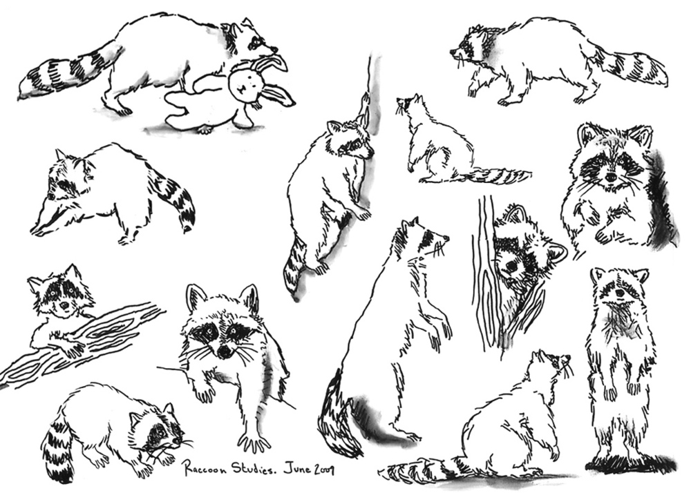 Troublemaker_RaccoonStudies.jpg