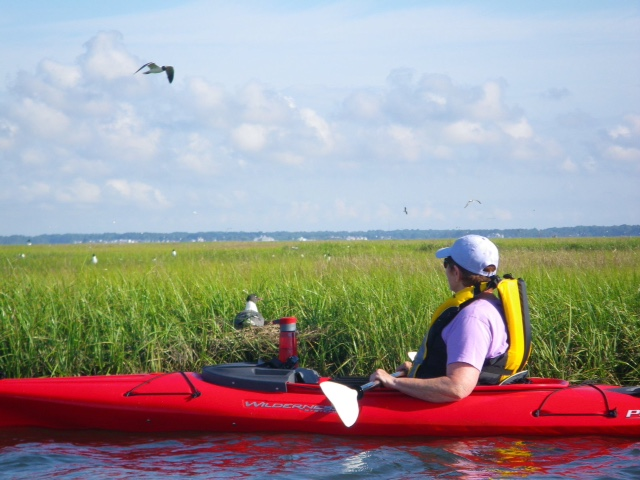 kayaker, marsh, .JPG
