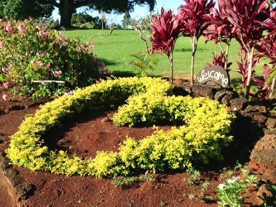 Kauai Love
