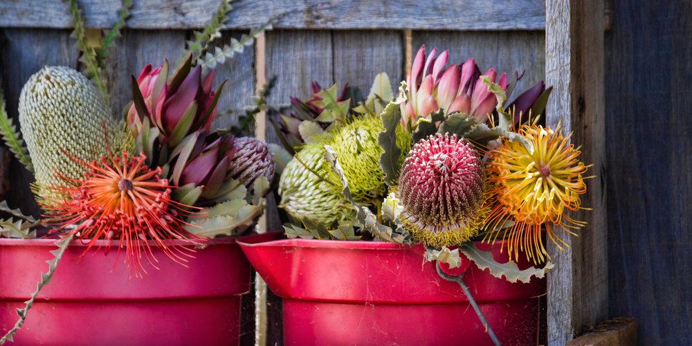 z - Maui Florals.jpg