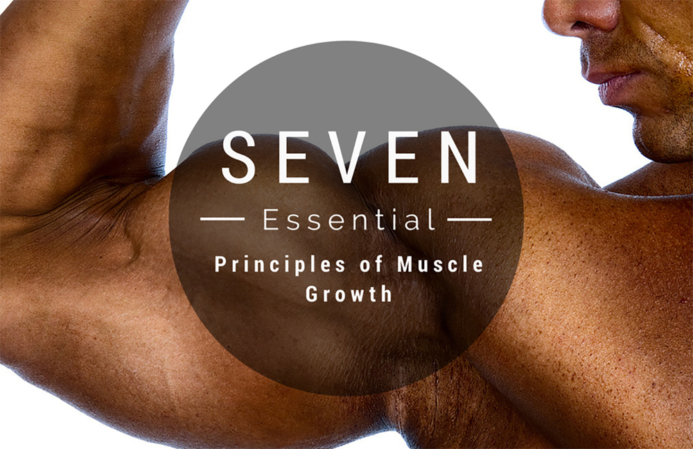 Seven Essential Principles of Muscle Growth