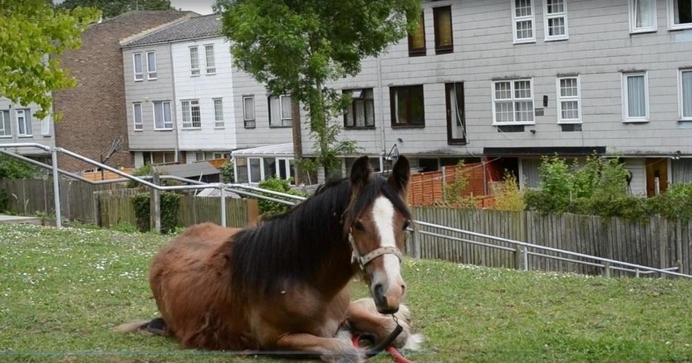 horsefilm2.jpg