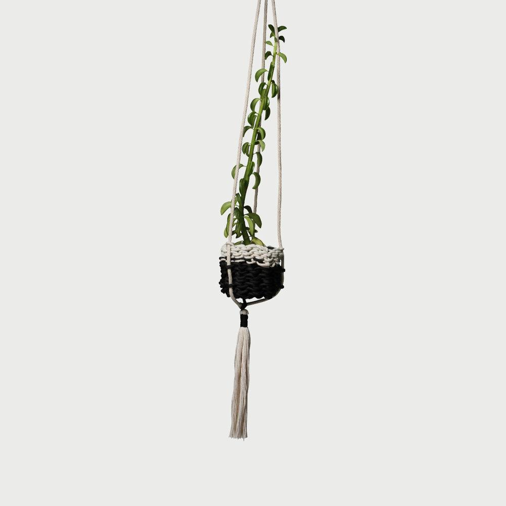 Hanging Basket #018