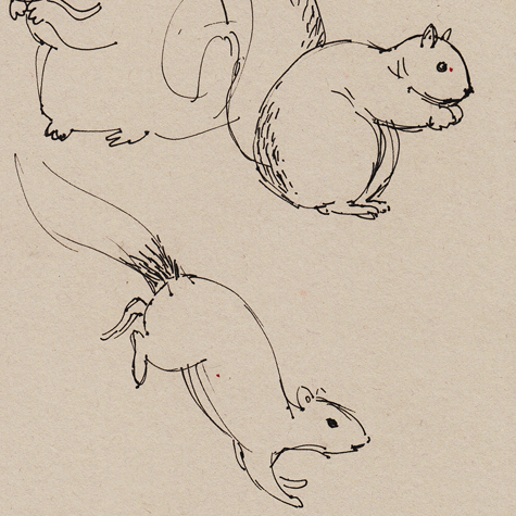 Squirrel sketches