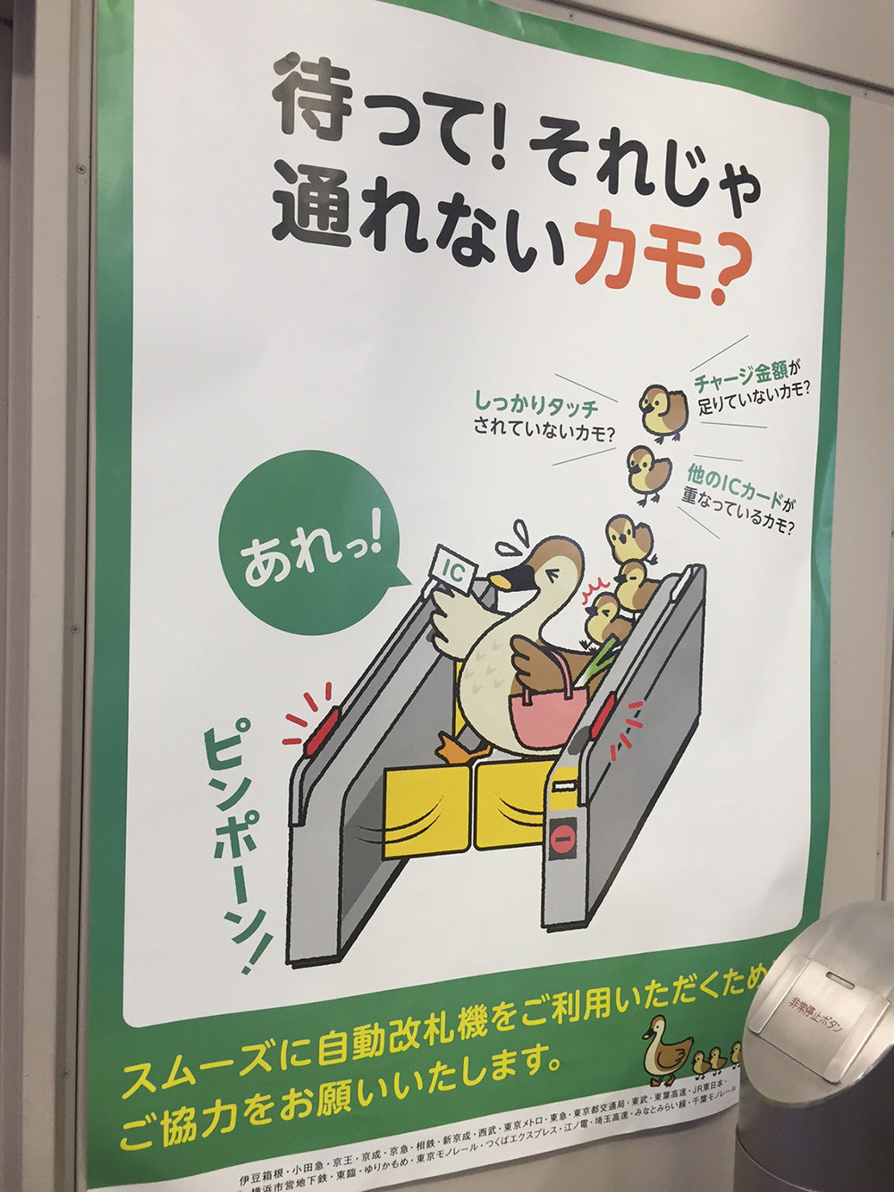 subway duck.JPG