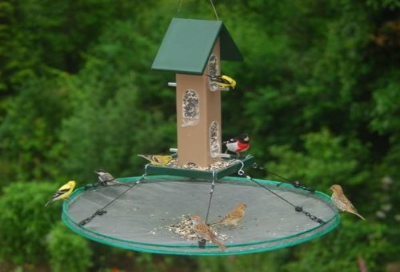 blog the ultimate bird seed catcher