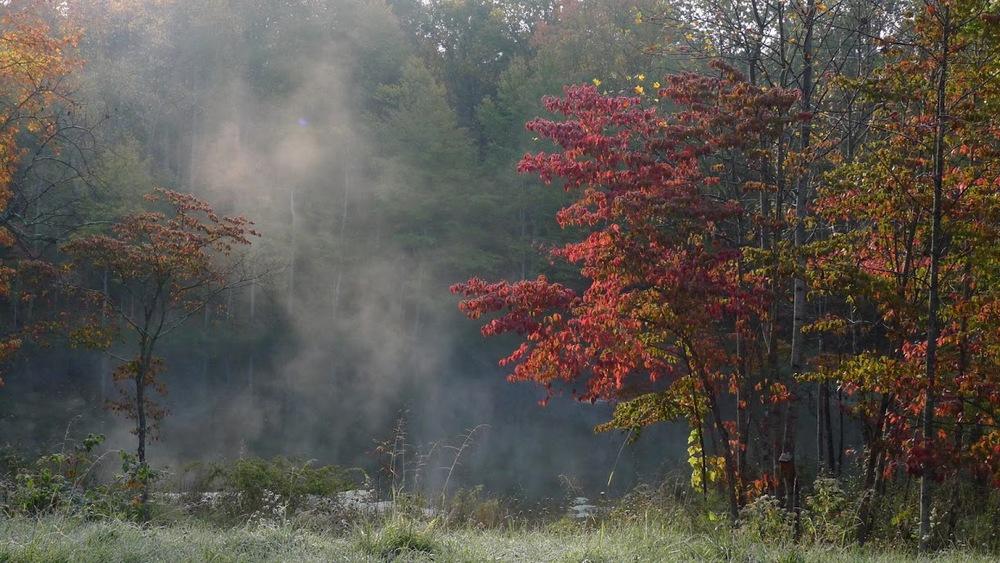 cabin pond fog.jpg