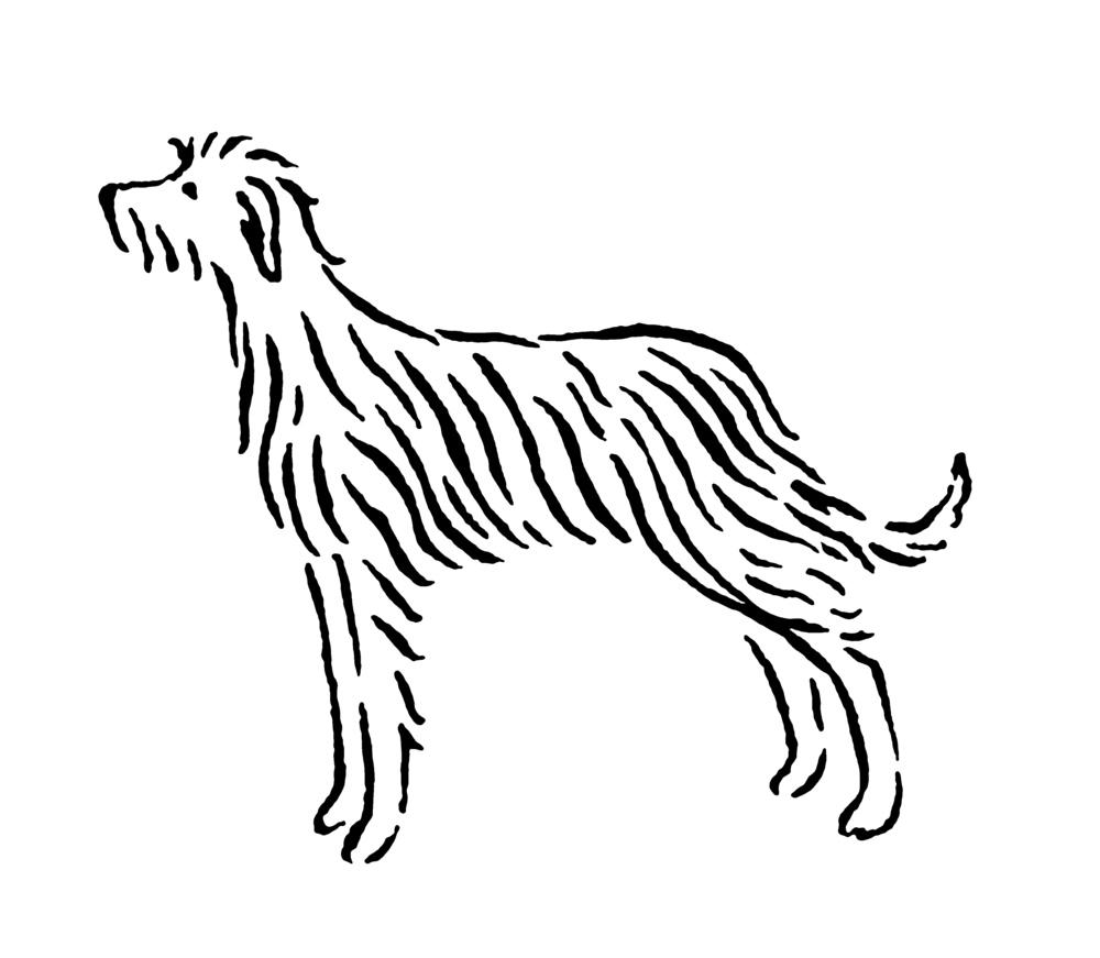 irishwolfhound_e.jpg