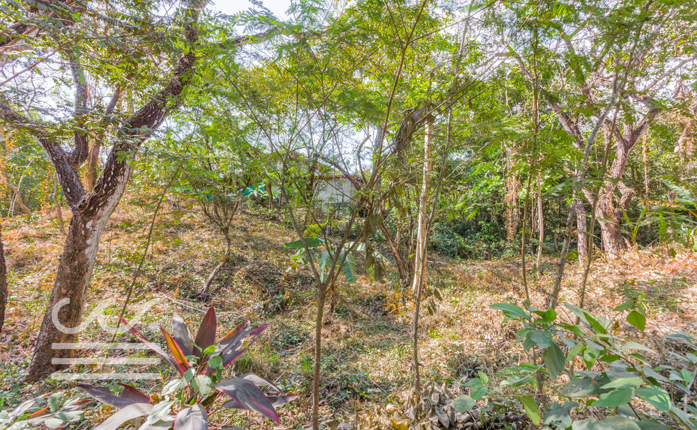0.33 acres | 1,480 sqm | Jungle view
