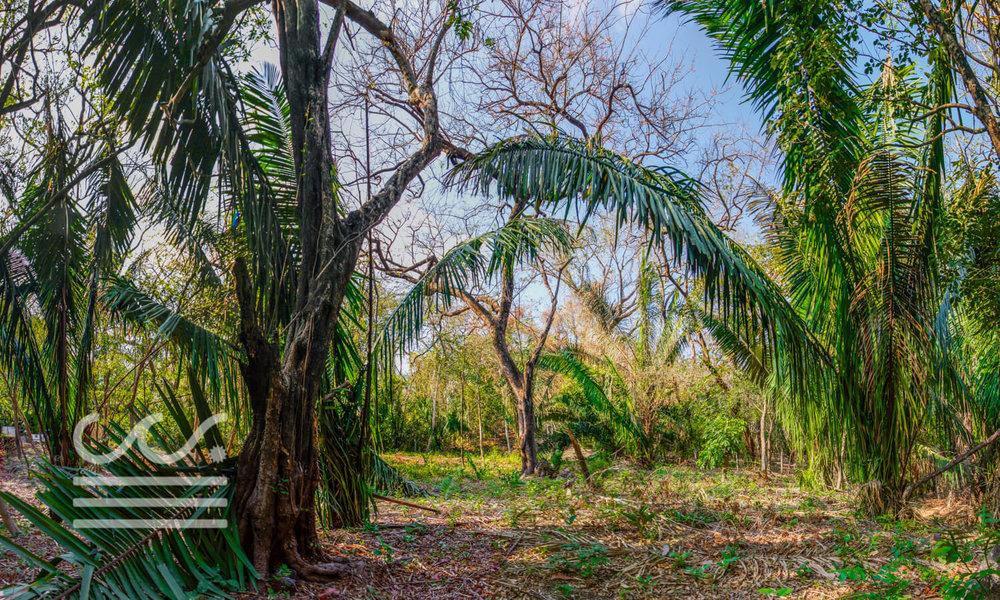 0.31 acres | 1251 sq m. | Walk to the beach