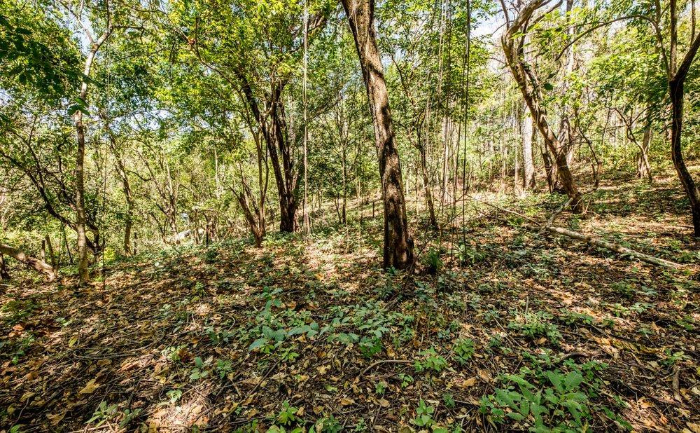 0.32 acres | 1,300 sq. m. | Walk to River Mouth | Abundant Wildlife