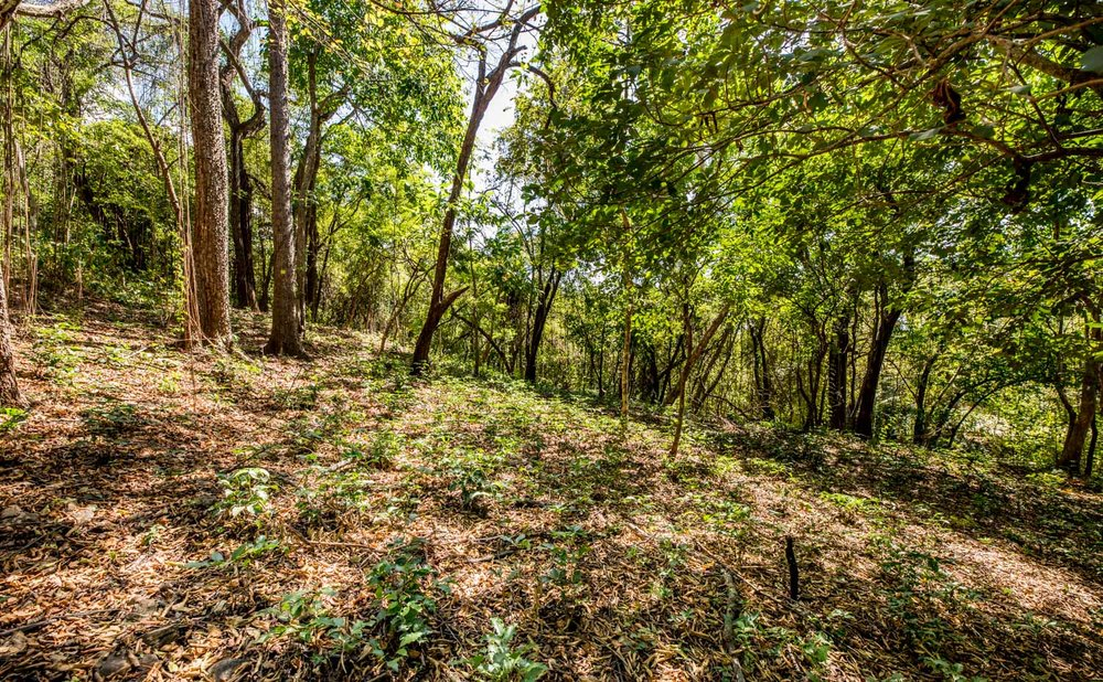 0.32 acres | 1,300 sq. m. | Walk to River Mouth | Abundant Wildlife