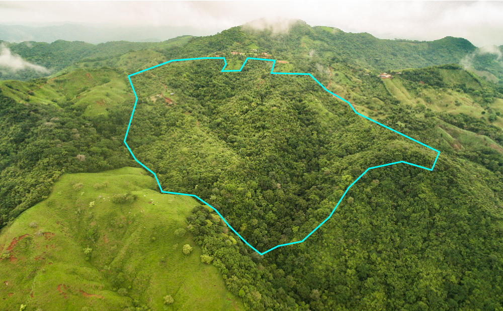 35.5 Hect.   87.7 acres.   Sub-dividable   Epic Ocean View   Waterfalls   Functioning Cafetal   Fruit Trees