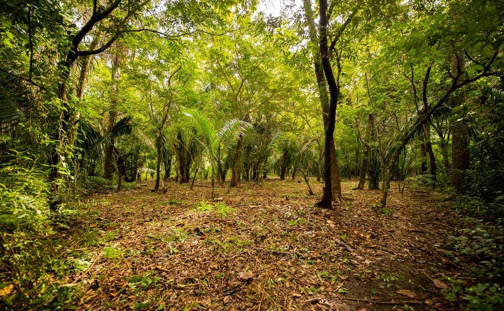 0.25 acres |1,023 m² | Walk to Surf | Borders NCA Parkland
