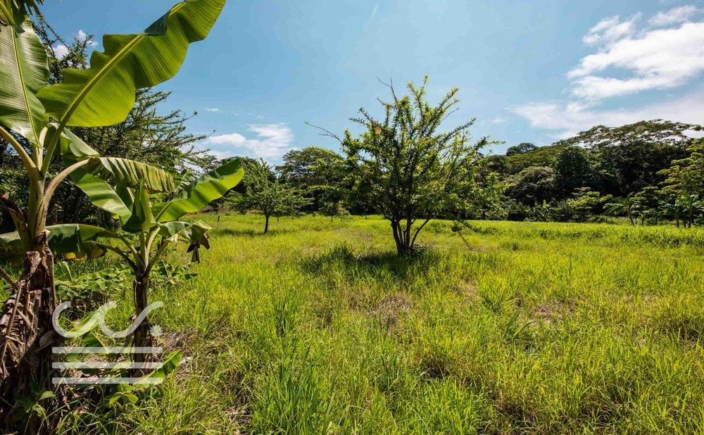 Esperanza-Jungle-Lot-Wanderlust-Realty-Real-Estate-Nosara-Costa-Rica-1.jpg