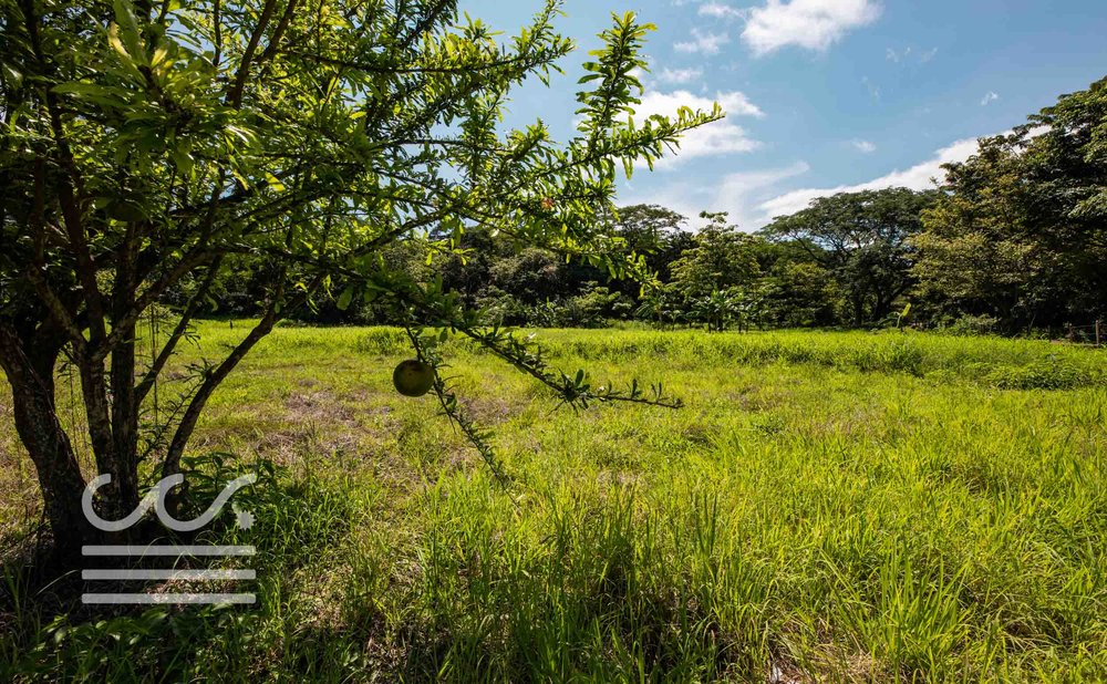 Esperanza-Jungle-Lot-Wanderlust-Realty-Real-Estate-Nosara-Costa-Rica-2.jpg