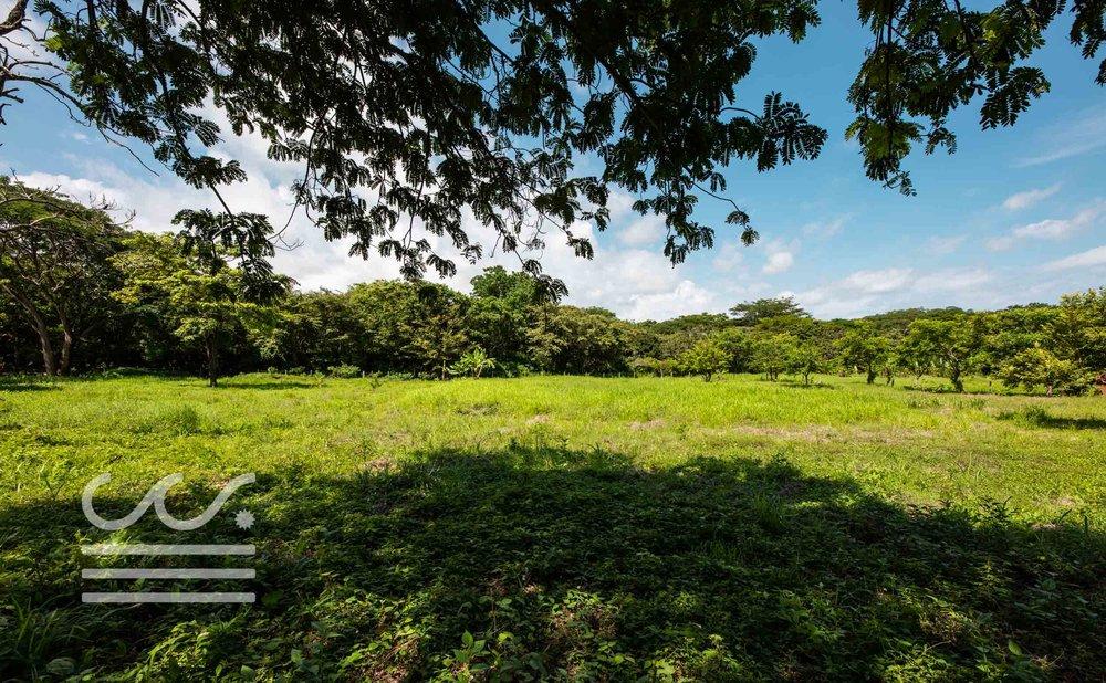 Esperanza-Jungle-Lot-Wanderlust-Realty-Real-Estate-Nosara-Costa-Rica-4.jpg