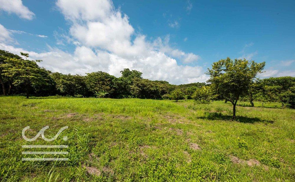 Esperanza-Jungle-Lot-Wanderlust-Realty-Real-Estate-Nosara-Costa-Rica-3.jpg