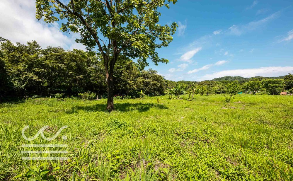 Esperanza-Jungle-Lot-Wanderlust-Realty-Real-Estate-Nosara-Costa-Rica-5.jpg