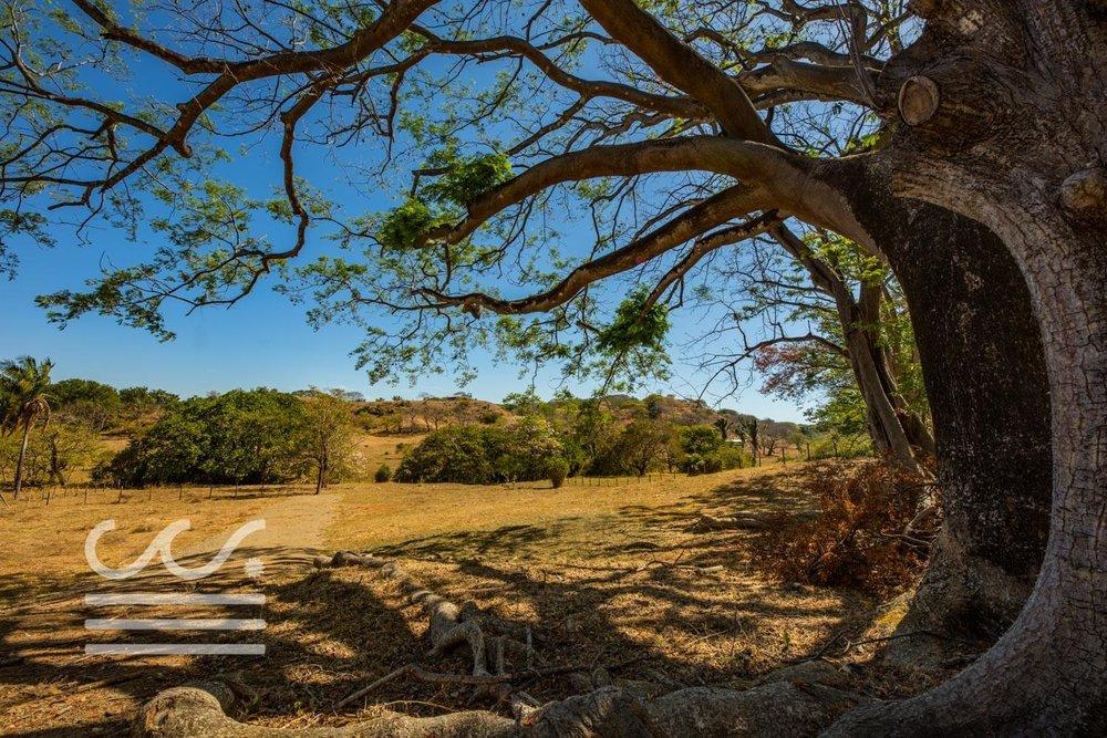 Dos-Playas-Lots-WM-Wanderlust-Real-Estate-Nosara-6compressed.jpg