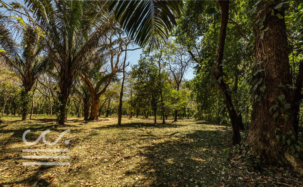 Nosara-Springs-25-Wanderlust-Realty-Real-Estate-Rentals-Nosara-Costa-Rica-8.jpg