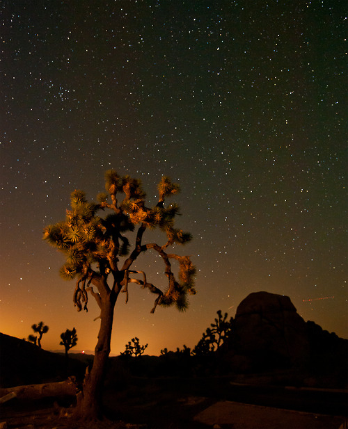 We'll arrive in Joshua Tree as the stars start to fall, take a walk in the dusk, then cruise to the legendary Pappy and Harriets in Pioneer Town where we'll dance to awesome bands with the locals. Ah...wasn't that nice?