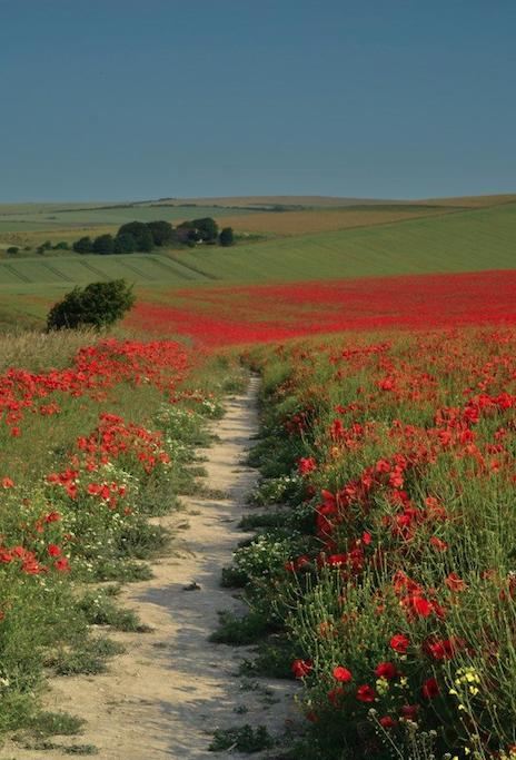 poppy fields TSWIL