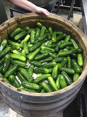 Cukes in the barrel,ready to become pickles