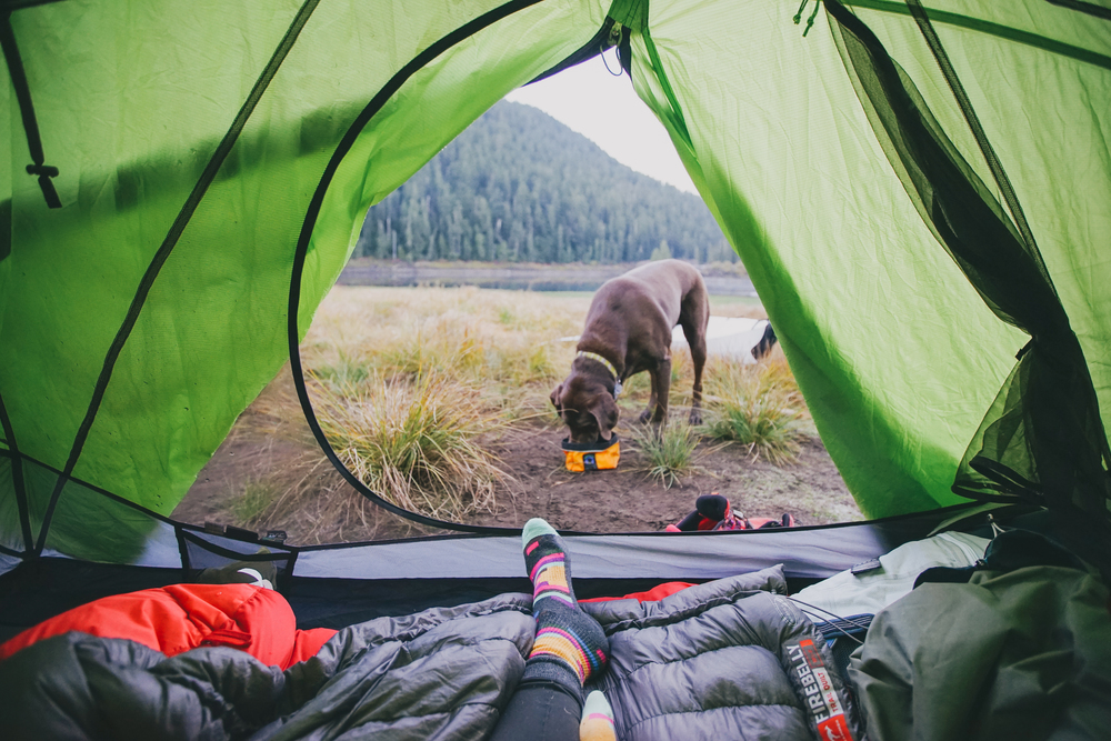 I had never used Nemo tents until last summer (2016). I can tell with no questions or concerns iu0027m completely sold on them for life now and here is why. & The Only Tent You Need: Nemo Losi 3P u2014 Elena Pressprich