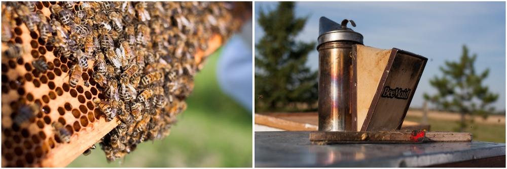 Paul Kirvan Bees_0002.jpg