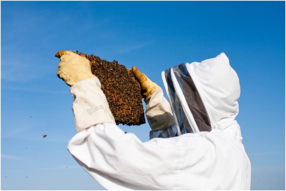 Paul Kirvan Bees_0003.jpg