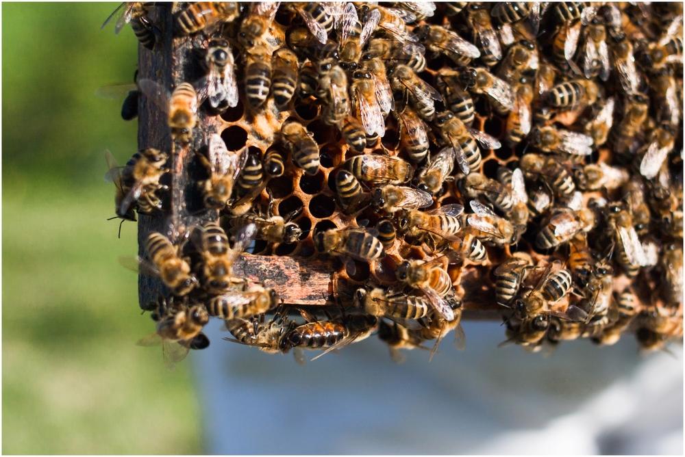 Paul Kirvan Bees_0004.jpg