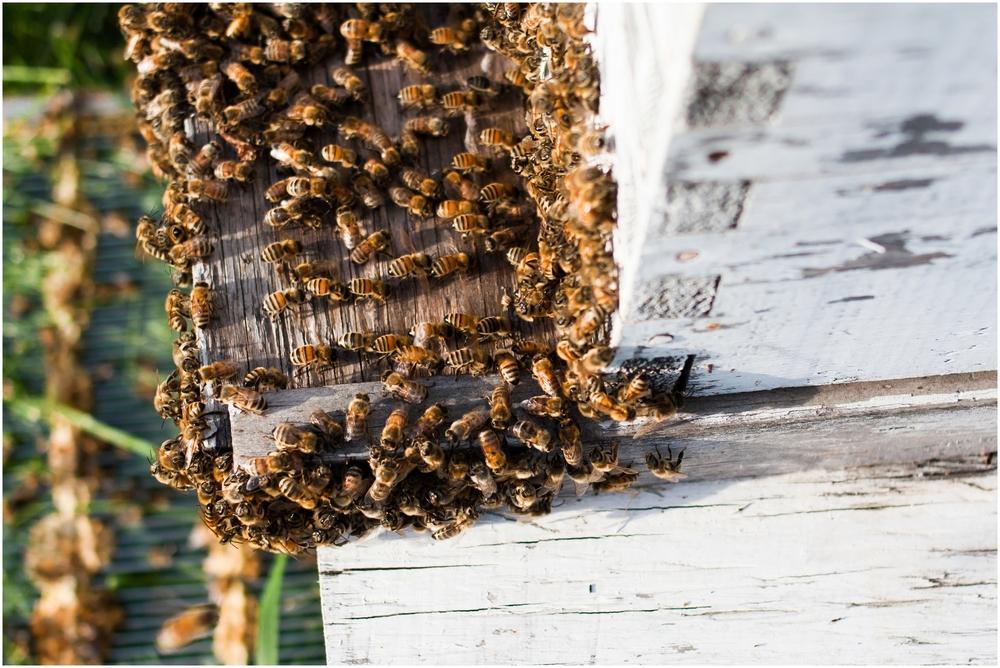 Paul Kirvan Bees_0005.jpg