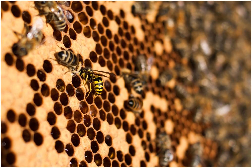 Paul Kirvan Bees_0008.jpg