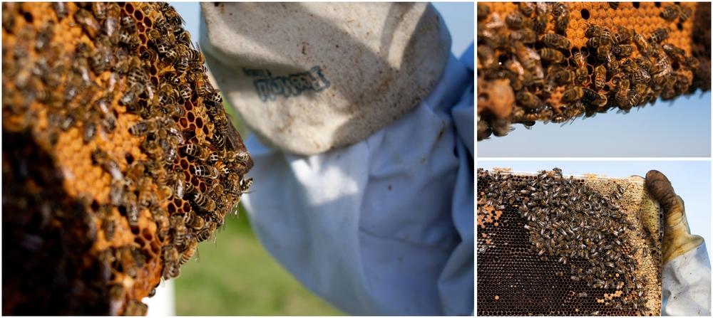 Paul Kirvan Bees_0012.jpg