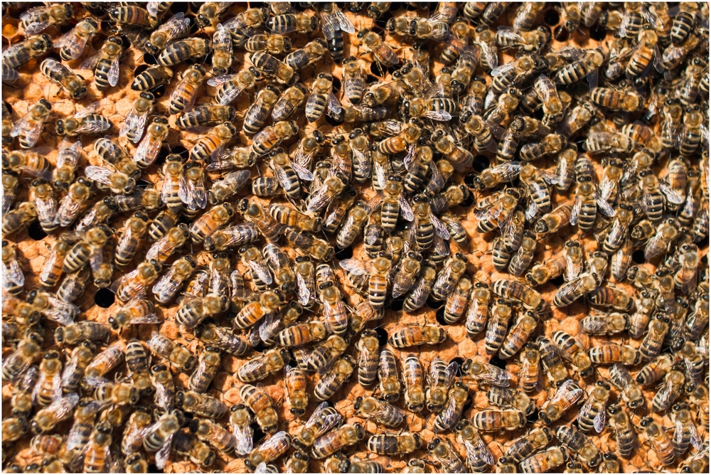 Paul Kirvan Bees_0016.jpg