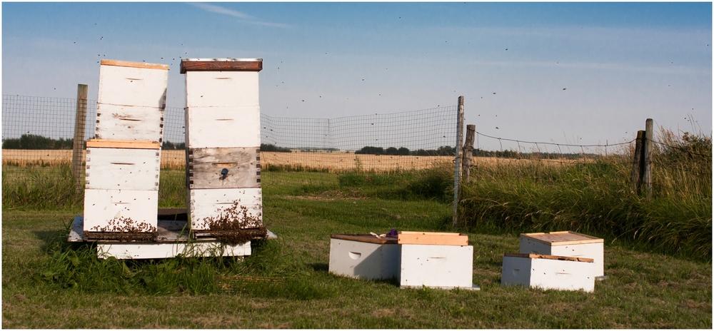 Paul Kirvan Bees_0017.jpg