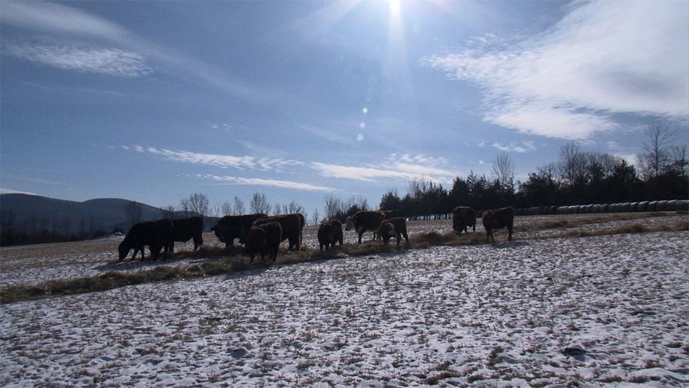 Emsig Farm Scene