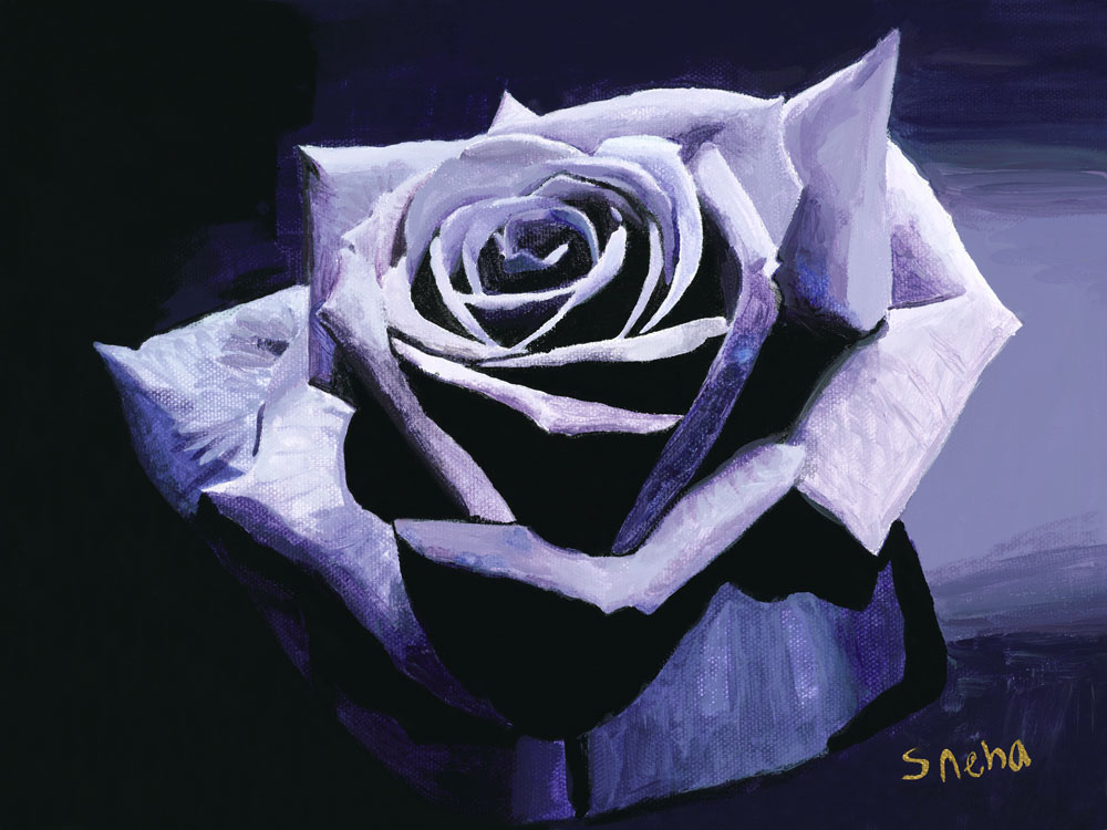 Purple-Rose.jpg
