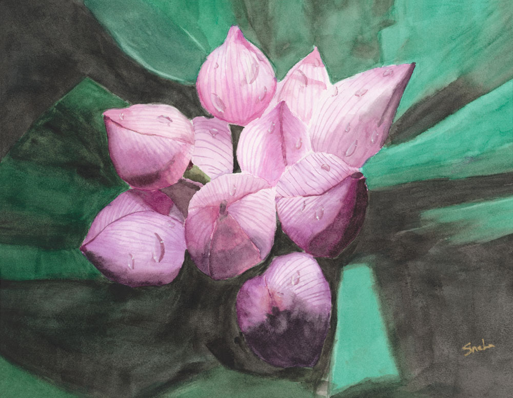 Lotus-Buds.jpg